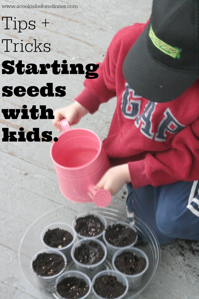 Starting seeds with kids is a great way to get your garden going. It is a fun project with a tasty result! Read the full post for tips and tricks!
