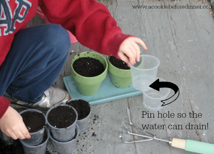 Tips and tricks starting seeds with kids 3