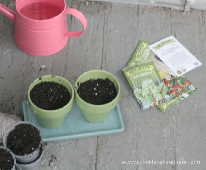 tips and tricks startng seeds with kids 4