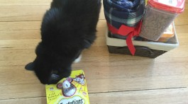 Purrfect Pet Gift 2