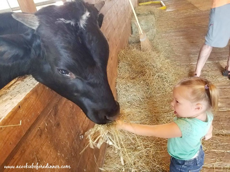 You can feed the animals at Retrat Farm in Brattleboro