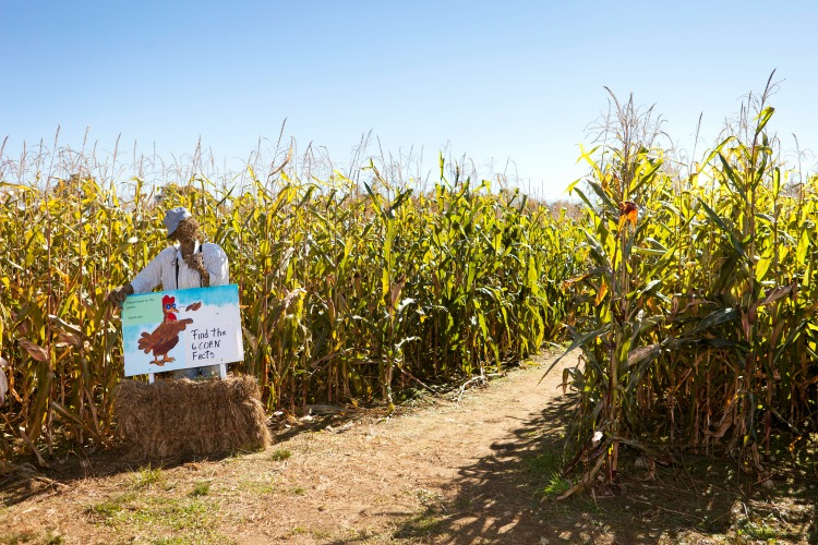 Looking to visit corn mazes in Western MA? This is a great list!