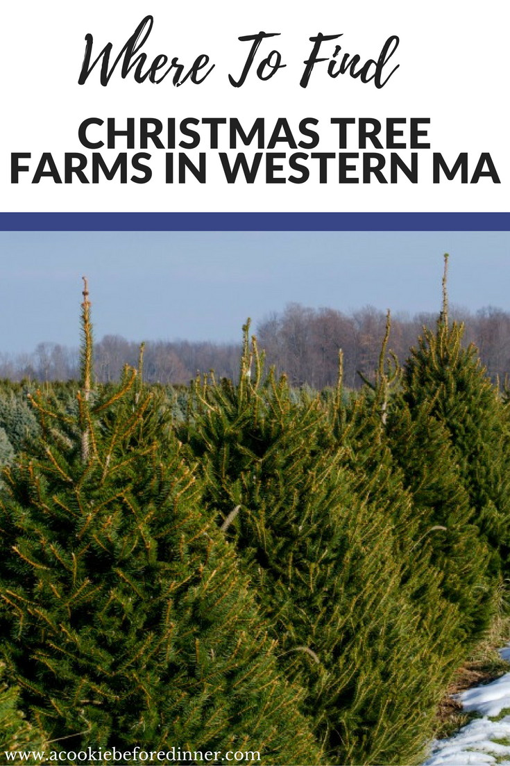 Are you looking for Christmas Tree farms in Western MA? Here is a listing of Christmas Tree farms in Hampshire, Hampden and Franklin Counties!