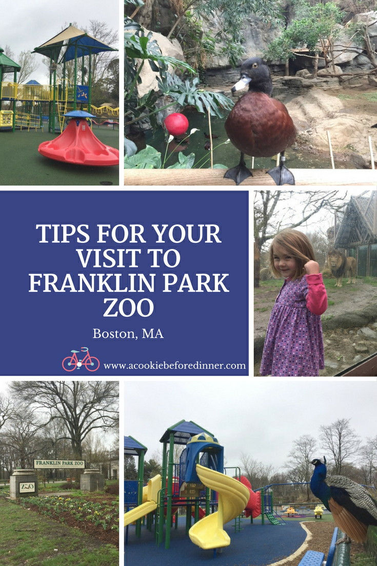 Franklin Park Zoo Tips. Things To Do In Boston MA with Kids