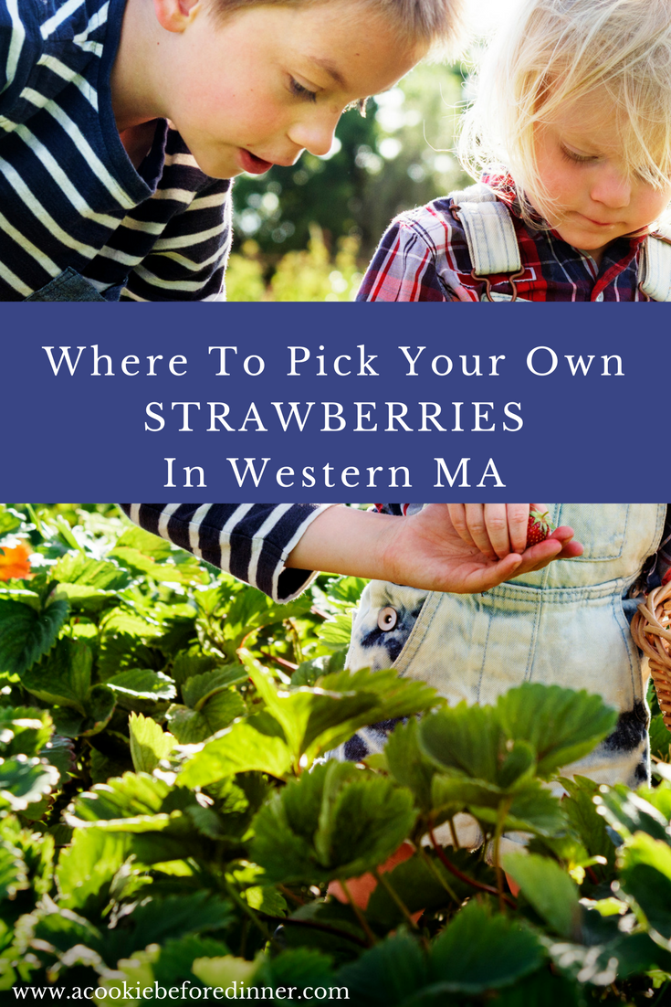 Strawberry Picking in Western MA