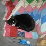Purina Pro Plan Good Life Cat Adventure