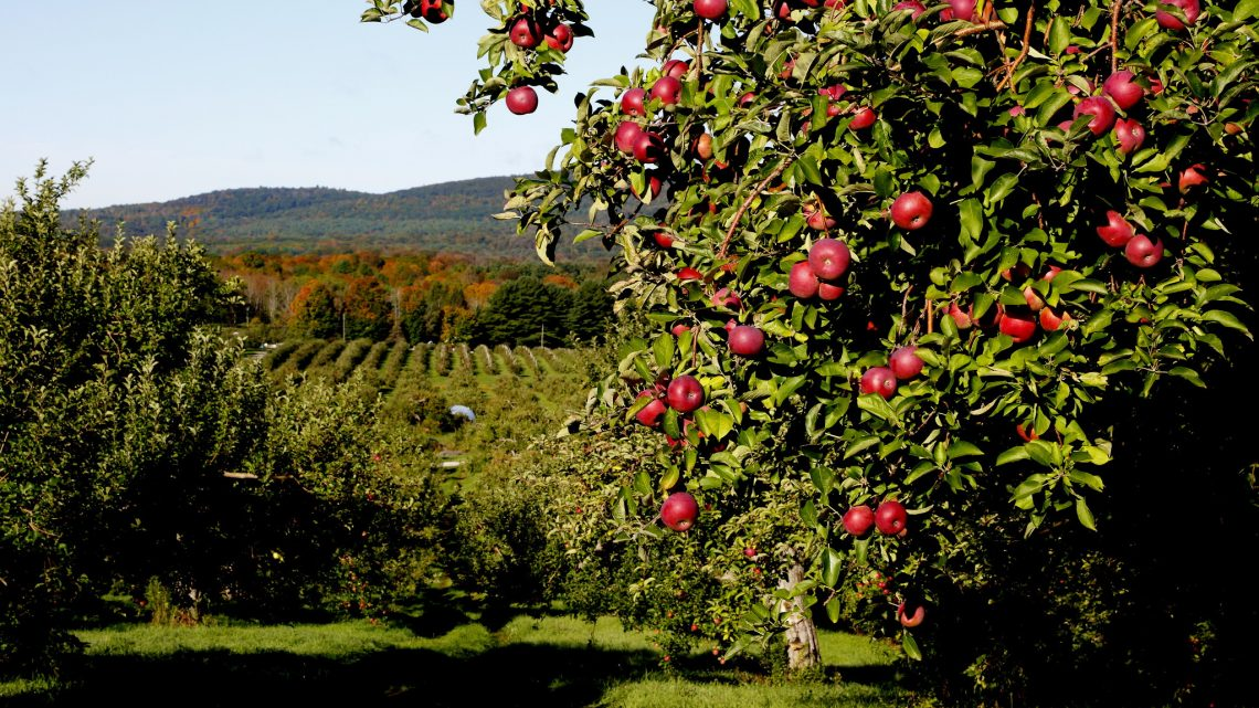 Wondering where to pick apples in Western MA? Well, look no further, here's a huge list!