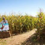Corn Mazes In Western MA