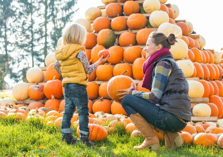 Looking for pumpkin patches in Western Ma? Here's a big list!