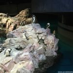 4 Things To Do With Your Preschooler At The New England Aquarium